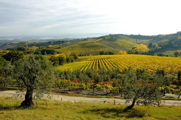 Itinerari nel Chianti Fiorentino